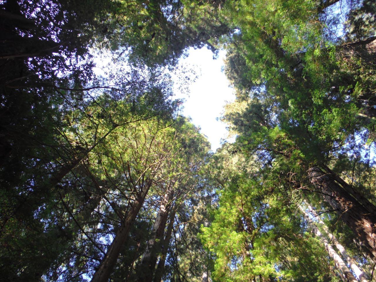 Redwoods 2017 10 08 221 Of 287