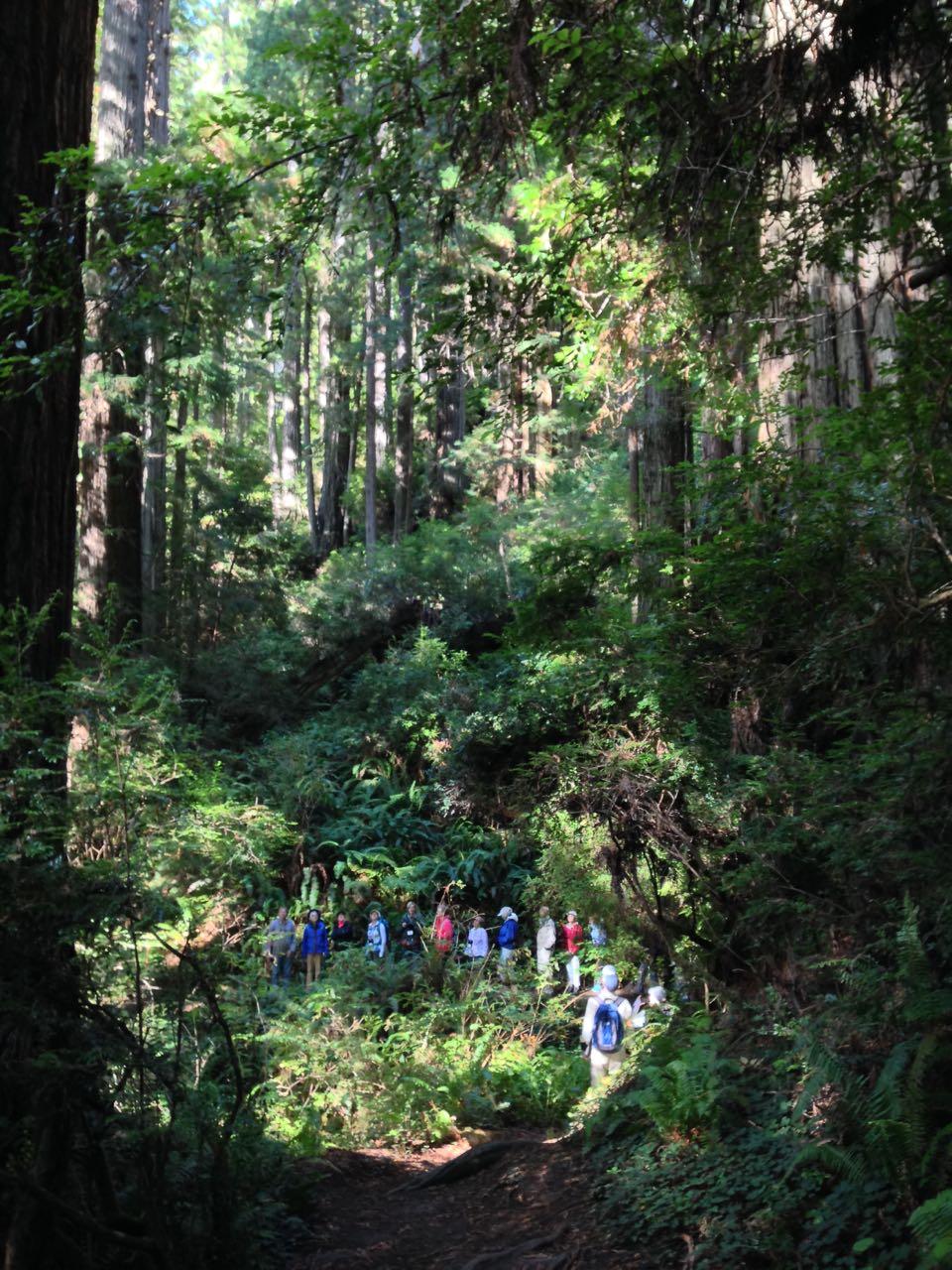 Redwoods 2017 10 08 225 Of 287