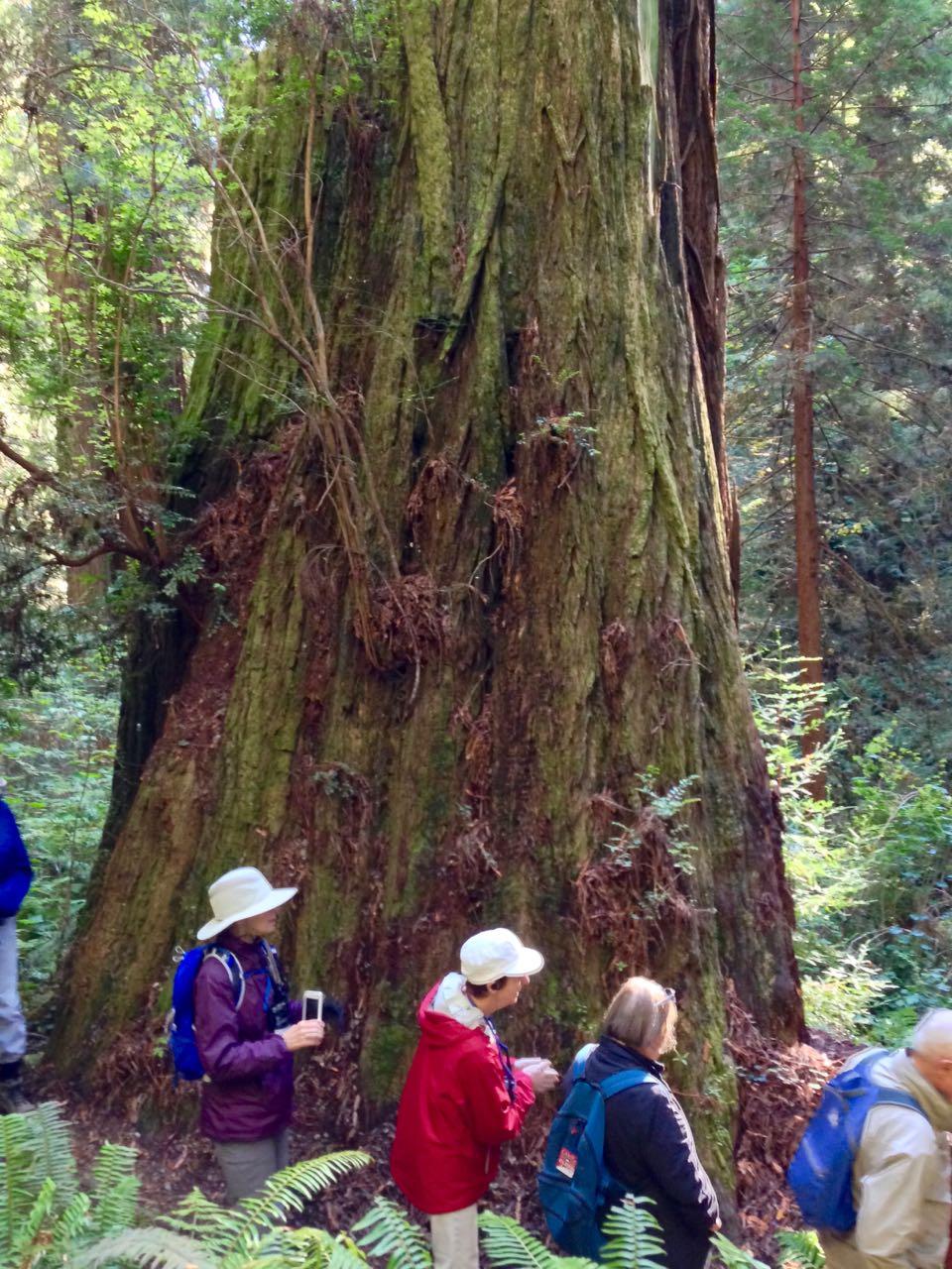 Redwoods 2017 10 08 228 Of 287