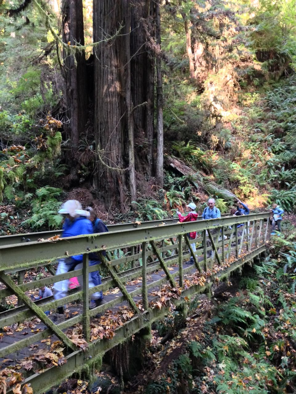 Redwoods 2017 10 08 235 Of 287