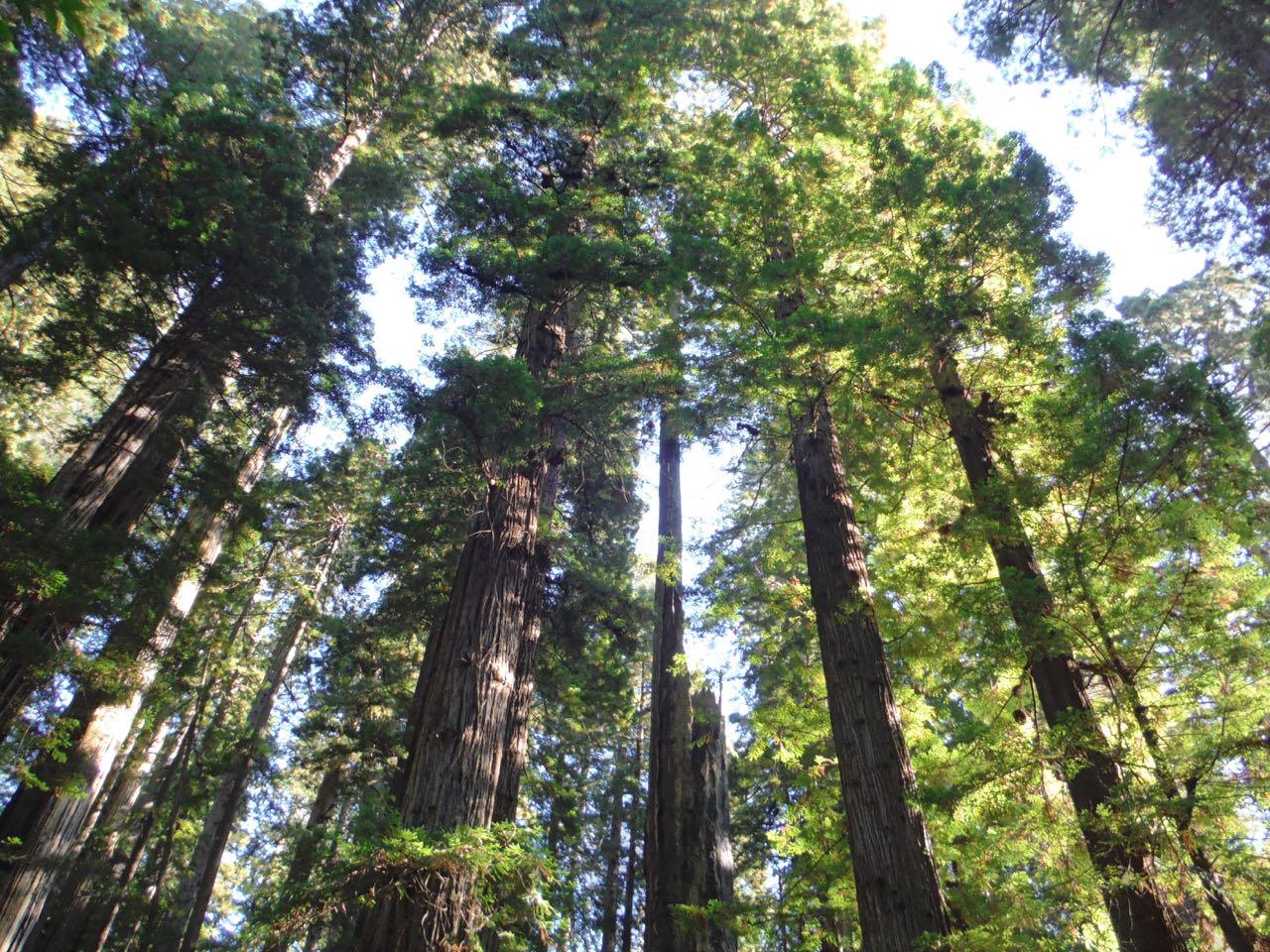 Redwoods 2017 10 08 241 Of 287