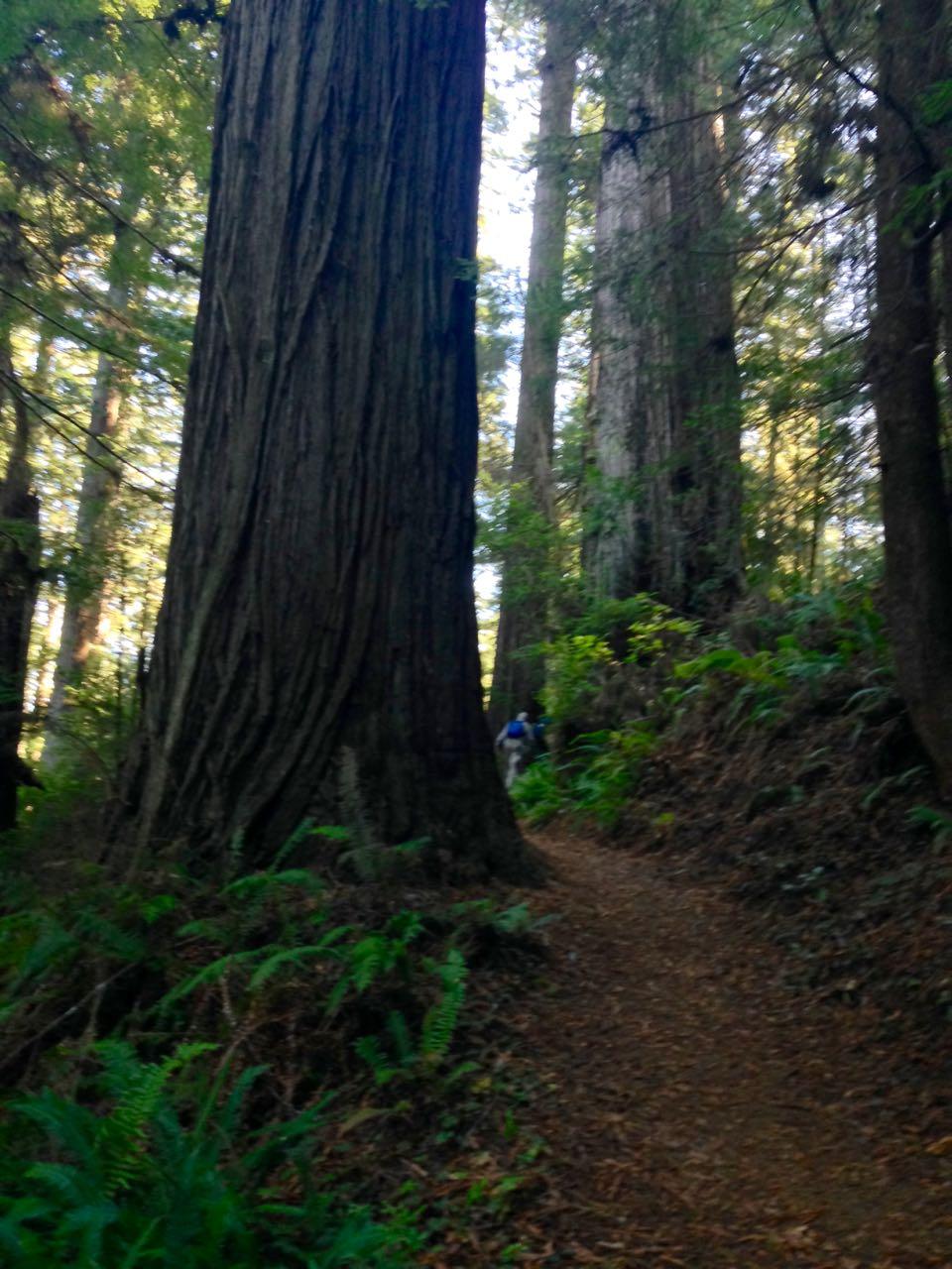 Redwoods 2017 10 08 250 Of 287