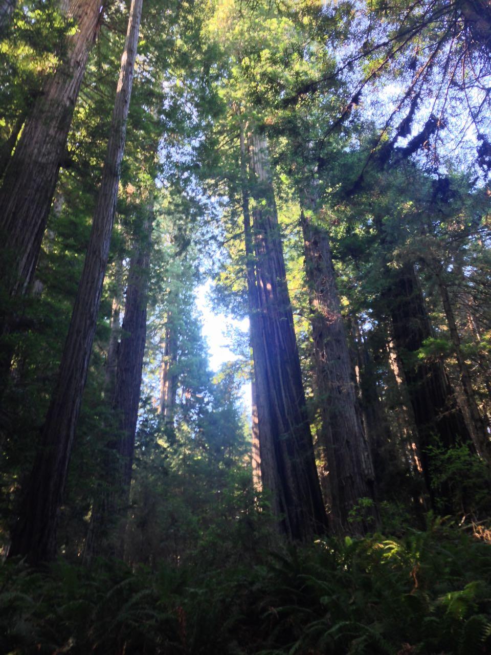 Redwoods 2017 10 08 251 Of 287