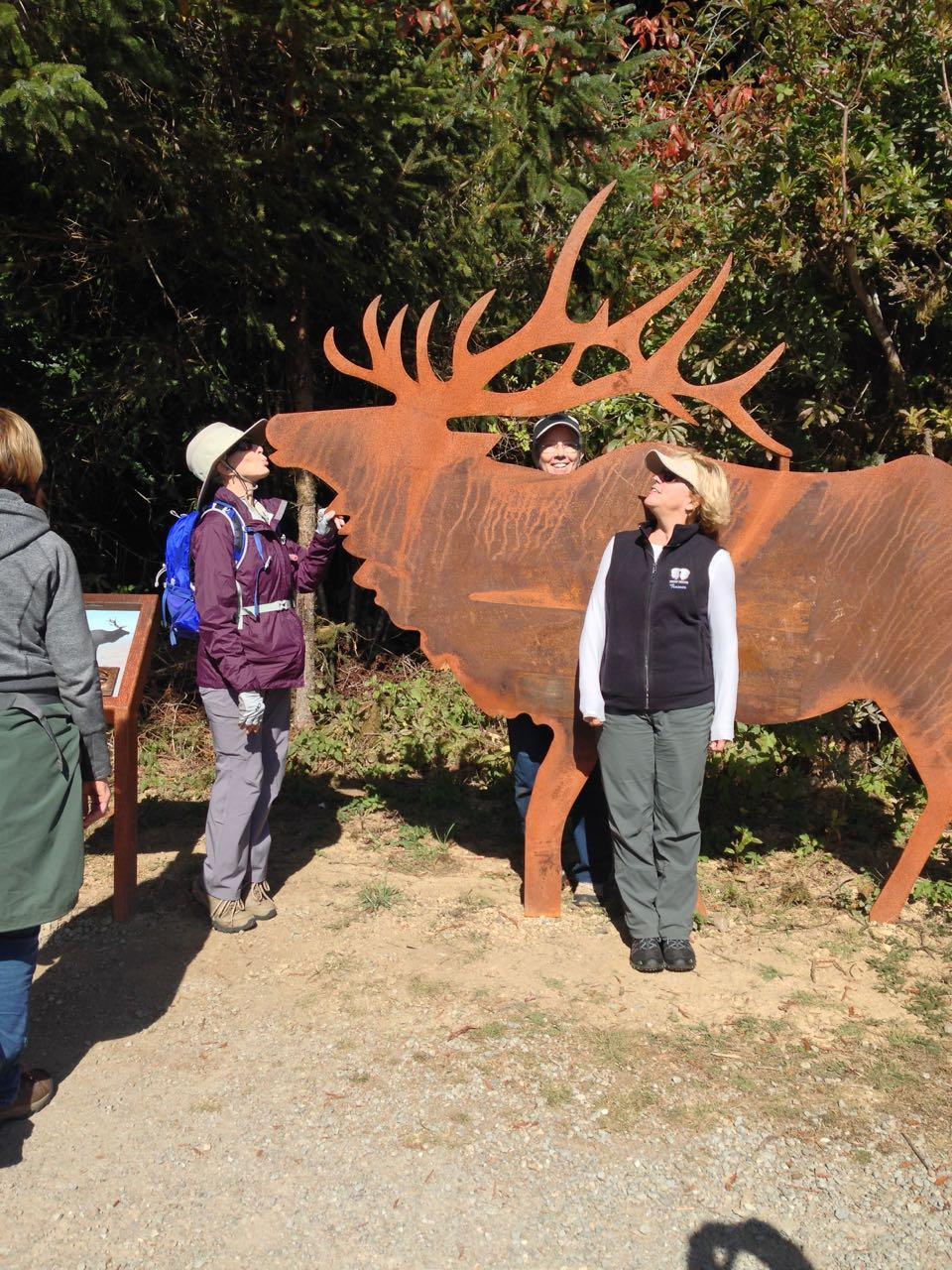 Redwoods 2017 10 08 259 Of 287