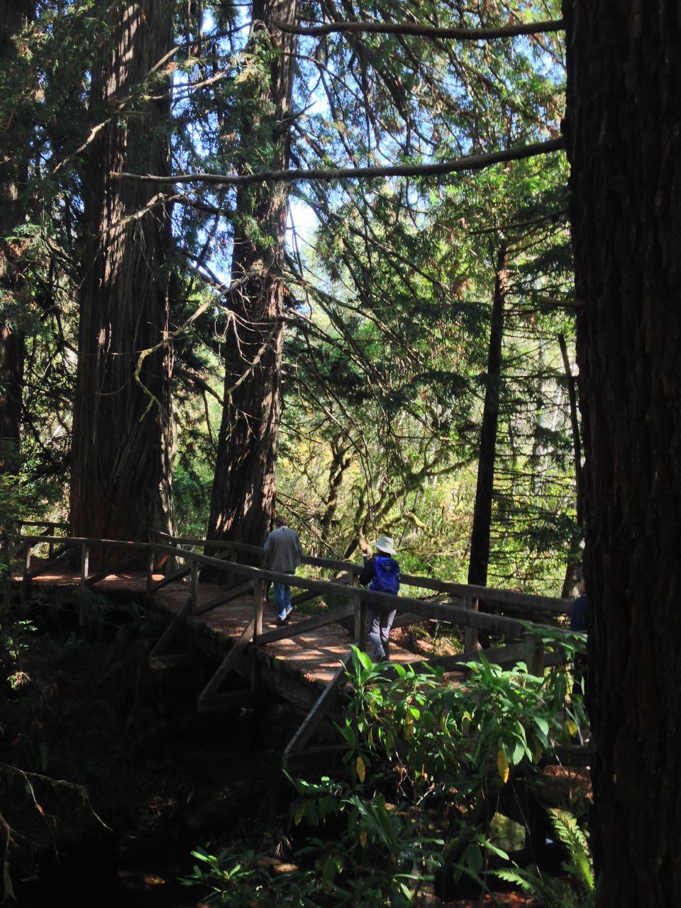 Redwoods 2017 10 08 262 Of 287