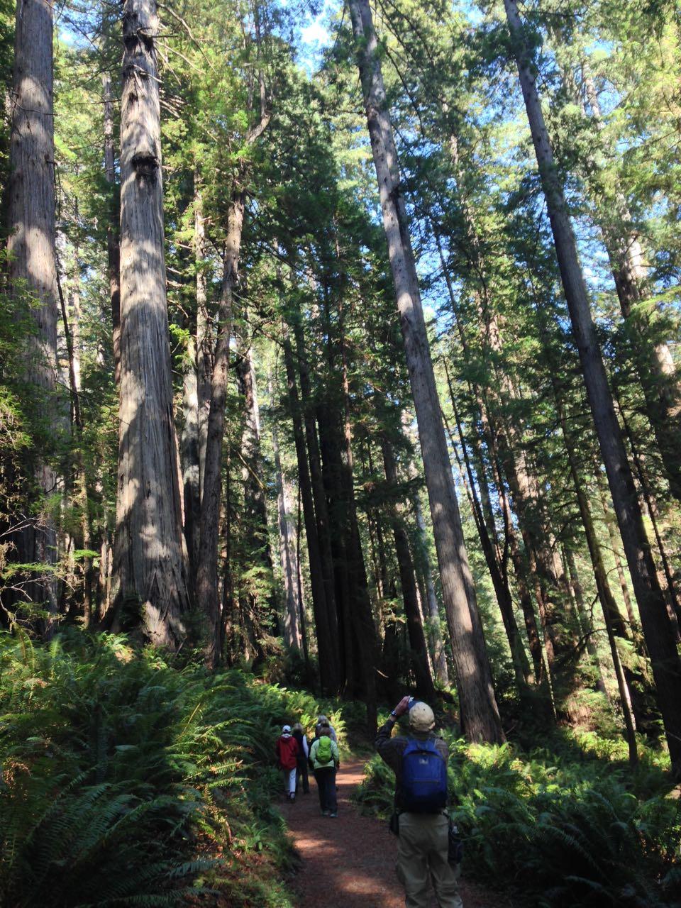 Redwoods 2017 10 08 267 Of 287