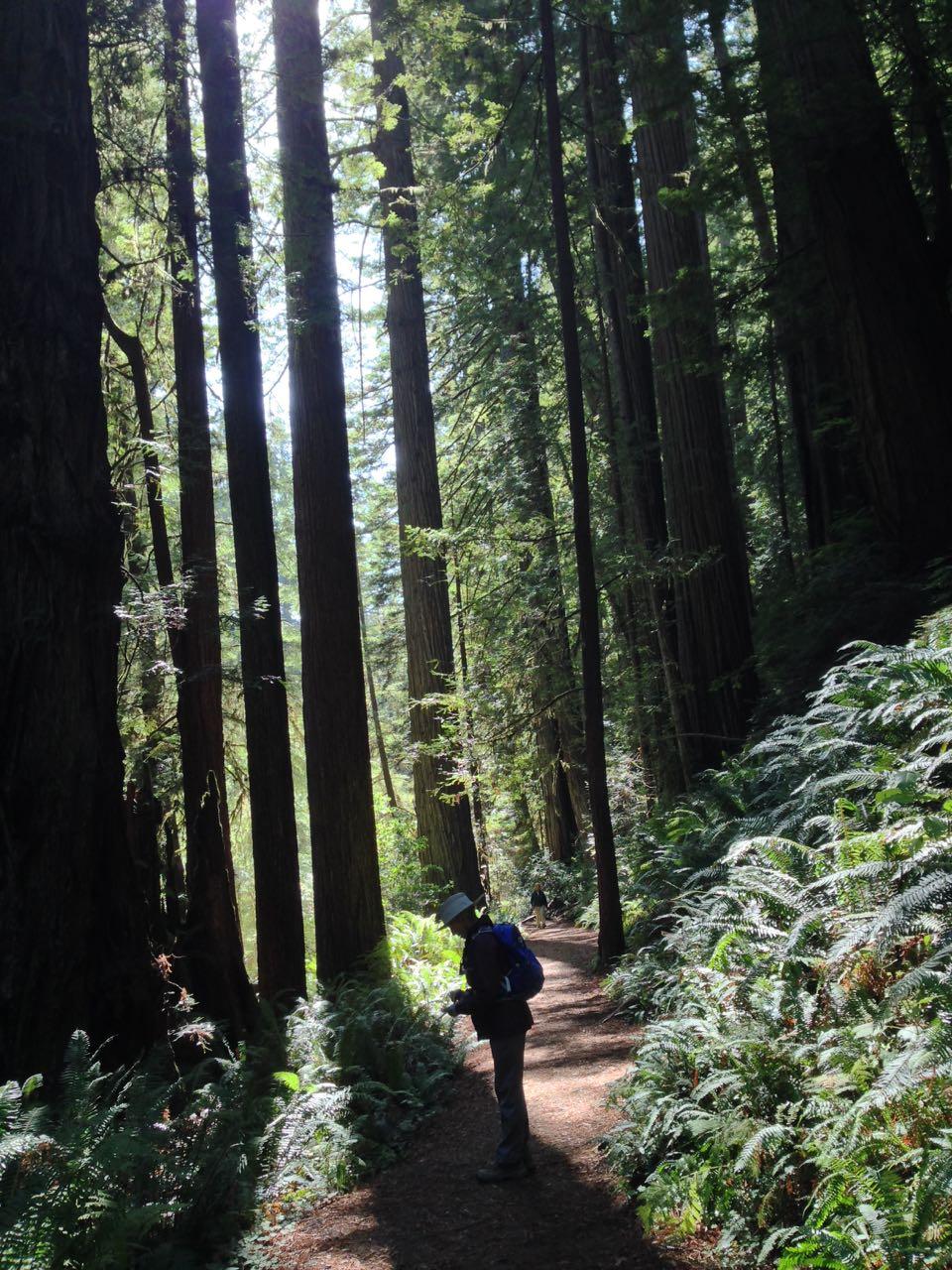 Redwoods 2017 10 08 269 Of 287