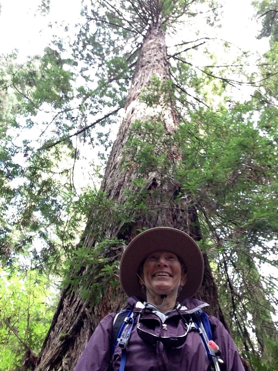 Redwoods 2017 10 08 271 Of 287