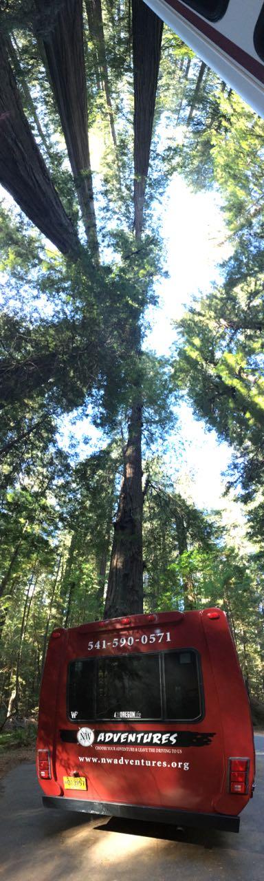 Redwoods 2017 10 08 287 Of 287