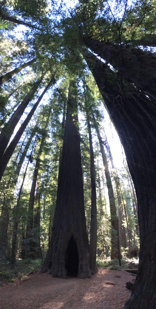 Redwoods 2017 10 08 43 Of 287