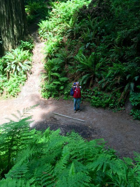 2018 06 03 Redwoods 120