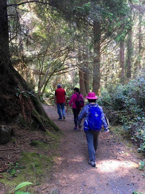 2018 06 03 Redwoods 203