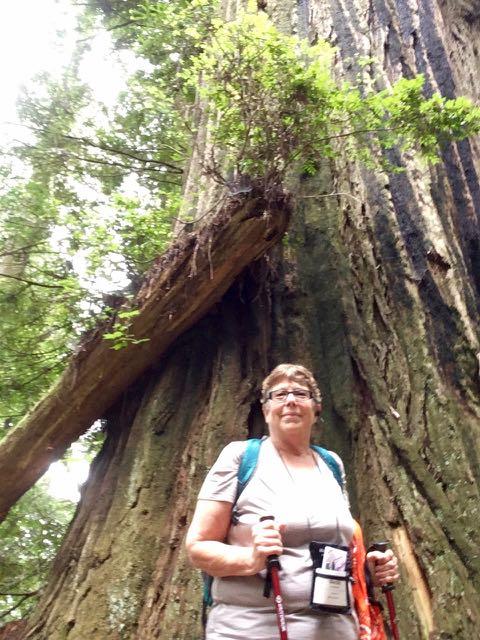 2018 06 03 Redwoods 240
