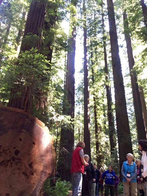 2018 06 03 Redwoods 26