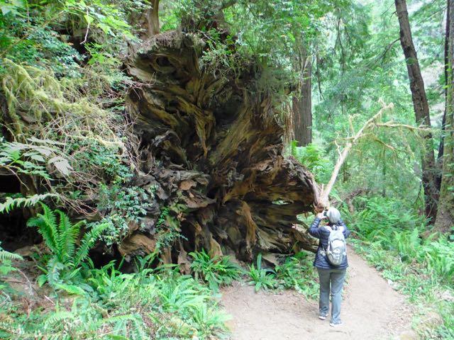 2018 06 03 Redwoods 267