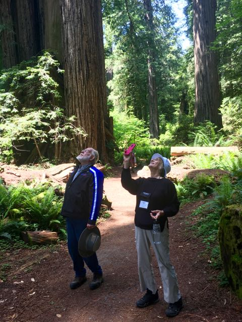2018 06 03 Redwoods 281