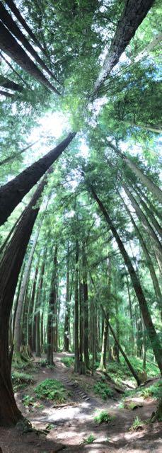 2018 06 14 Redwoods 135
