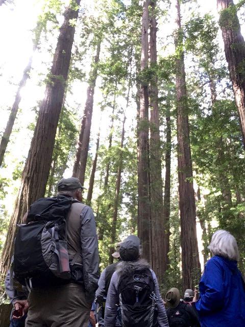 2018 06 14 Redwoods 16