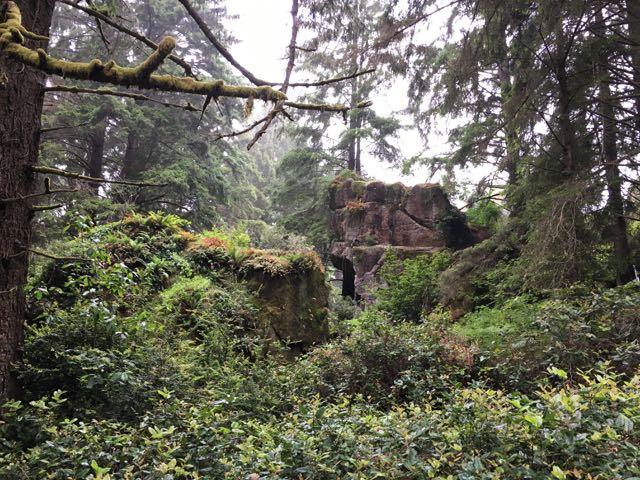 2018 06 14 Redwoods 199