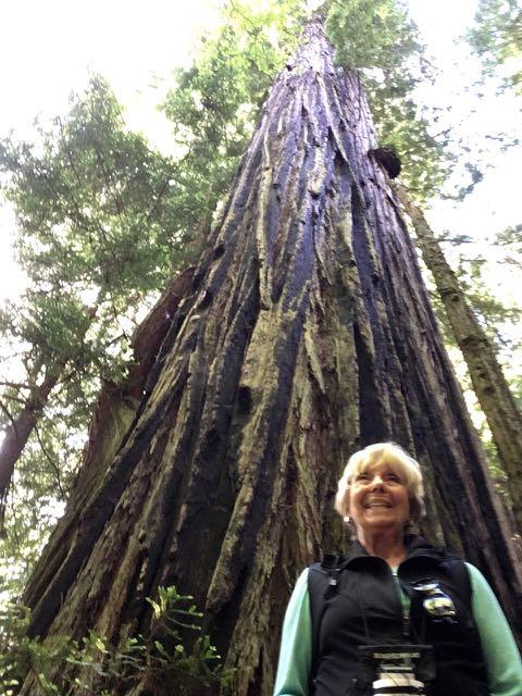 2018 06 14 Redwoods 264