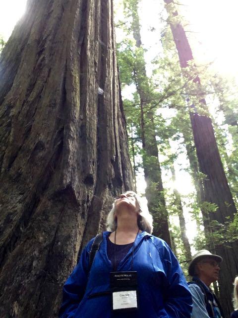 2018 06 14 Redwoods 3