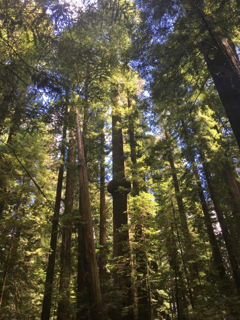 2018 06 14 Redwoods 34
