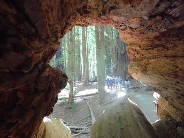 2018 06 14 Redwoods 52