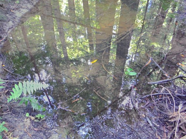 2018 06 14 Redwoods 67