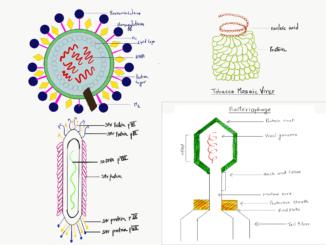 virus types