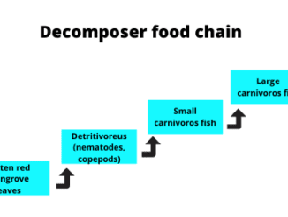 Decomposer food chain