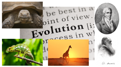 darwinism vs lamarckism