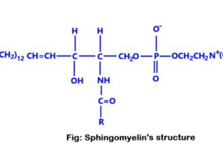 sphingomyelins
