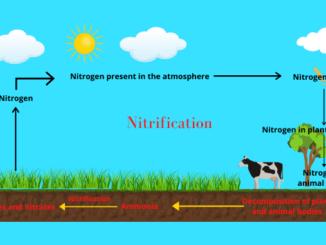 Nitrification process