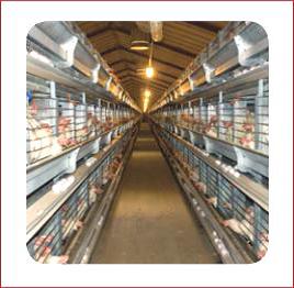 Egg Production Barns