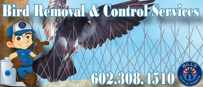 Bird Removal and Control Services Phoenix Az