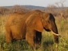 our-first-elephant