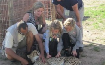 Wine Tasting and Cheetah Petting in Cape Town, South Africa