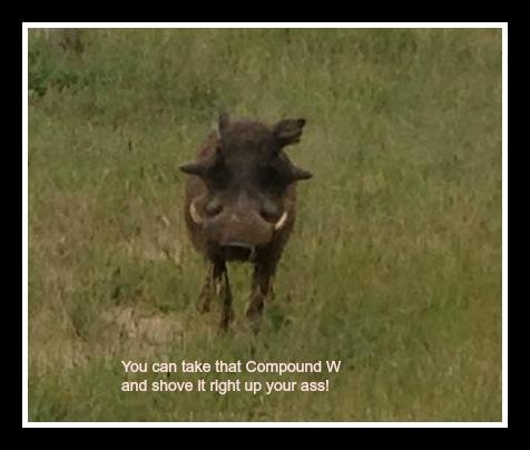 Wart Hog Pic