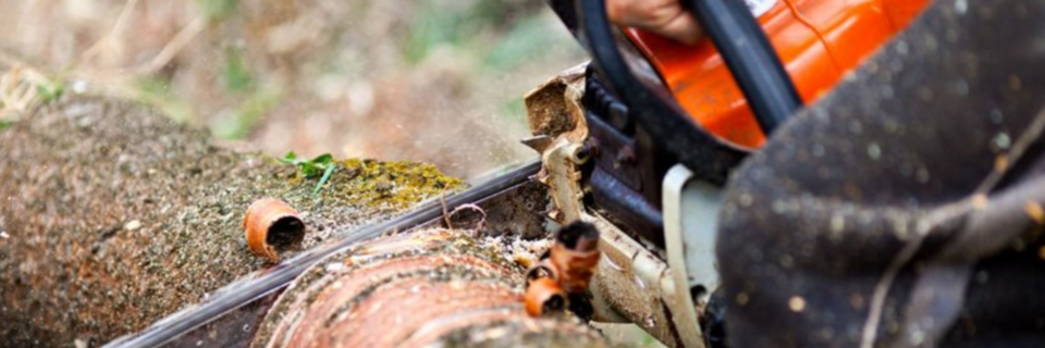 The best prices for tree care services