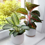 Using Plants to Stage your Home