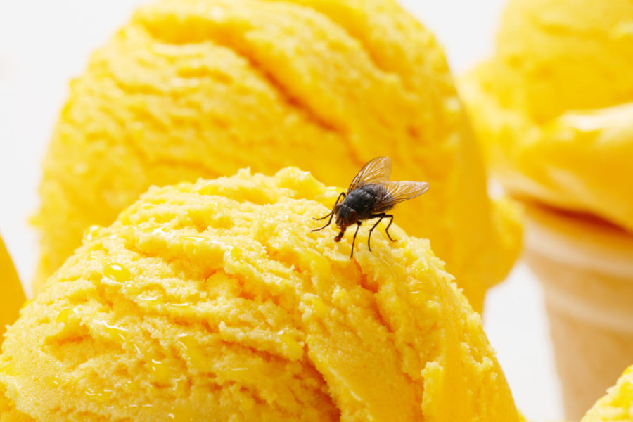 insect ice cream