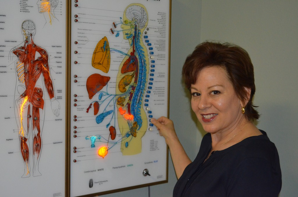 Chiropractic viewbox showing the spine's relationship to the organs.