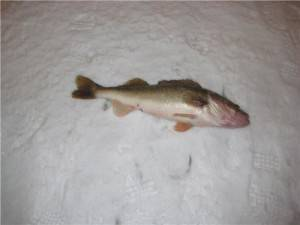 PECHE BLANCHE 2007-12-30 005