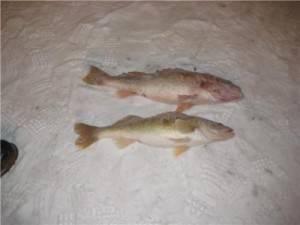 PECHE BLANCHE 2007-12-30 031