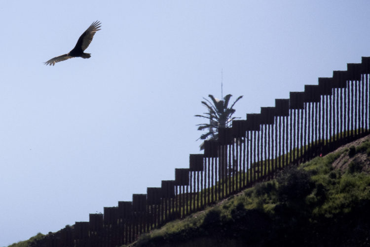 SAN YSIDRO, CA  03/12/2019: A hawk flies past the border wall between Tijuana, Mexico and San Ysidro. The U.S.-Mexico border is 1,933 miles long, stretching from the Pacific Ocean to the Gulf of Mexico, roughly 700 of those miles have fencing currently in place.In July 2019, the Supreme Court gave President Trump a victory in his fight for a wall along the Mexican border by allowing the administration to begin using $2.5 billion in Pentagon money for the constructionIn the run-up to his election victory, Mr Trump promised to build a wall along the border's entire 2,000-mile length.He later clarified that it would only cover half of that - with nature, such as mountains and rivers, helping to take care of the rest. But, since Mr Trump entered the White House, although some of the already existing barriers have been replaced, work on extending the current barrier has only just begun