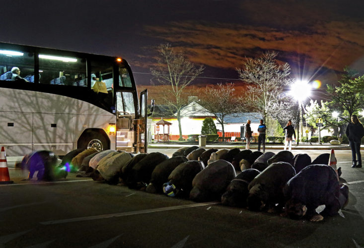 """PATERSON, NJ   03/20/2016:  A group of about 60 Muslims stop for morning prayers at a rest stop on the Garden State Parkway just before sunrise. The group was on the way to the """"March for Syrian Freedom"""" down in Washington DC early this morning. The bus left the Omar Mosque in Paterson at 530a.m., and was one of two buses leaving Paterson this morning. The rally, which commemorates the 5th anniversary of when the conflict began as an anti-government uprising with protesters taking to the streets on March 15, 2011, was designed to bring attention to the global humanitarian crisis and raise money to aid Syrian refugees worldwide. The program will include an interfaith conference at the Lincoln memorial, to be followed by a march to the White House.  Five years after it began, Syria's civil war is among the worst humanitarian crisis of our time. The civil unrest has killed more than 220,000 of its citizens, and it has been estimated that over 11 million people have been forced to leave their homes. Bombings have destroyed cities, human rights violations are widespread, and basic human necessities like food, housing, and medical care are sparse. Roughly half of Syria's population has fled to either neighboring countries or to Europe, many risking their lives in hopes of finding acceptance and opportunity abroad, while hundreds of thousands remain stranded in refugee camps across the Middle East, Europe, and the Mediterranean region prompting rights groups to accuse the international community of failing Syria."""