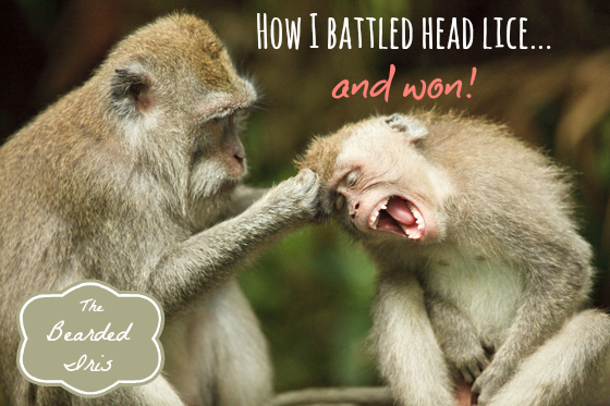 How I battled head lice and won by The Bearded Iris