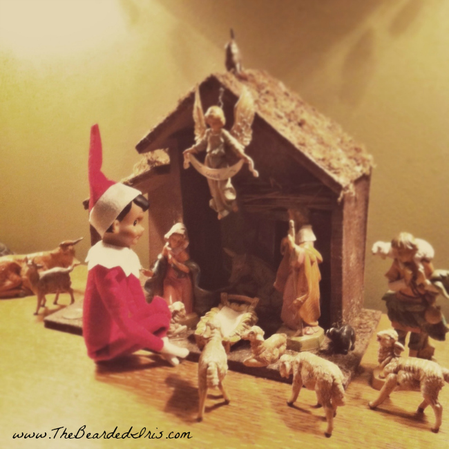 Dobbie awaiting the birth of the Christ Child via The Bearded Iris