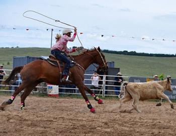 Wrangler roping a calf.