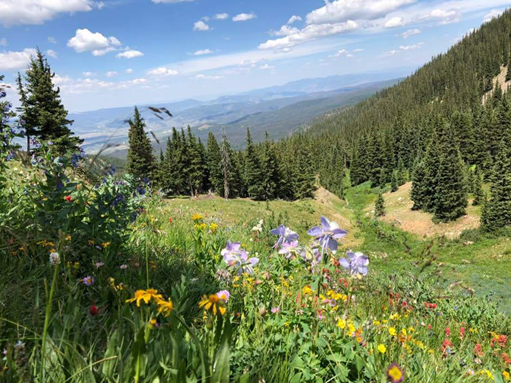 A lovely panorama of an alpine valley decorated with wildflowers.